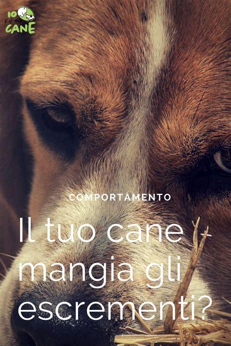 cibo per cani fatto in casa oltre 25 fantastiche idee su cibo per cani fatto in casa