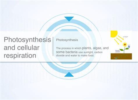pin cellular respiration and photosynthesis venn diagram