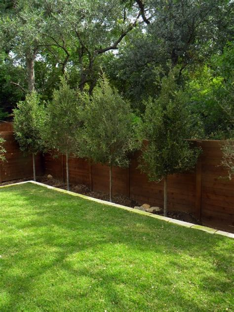 good trees for small backyards small minimal backyard modern landscape austin by