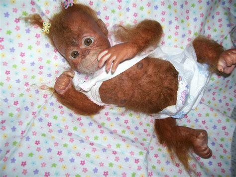 puppy monkey baby doll pin ooak reborn babies adoption asian baby on
