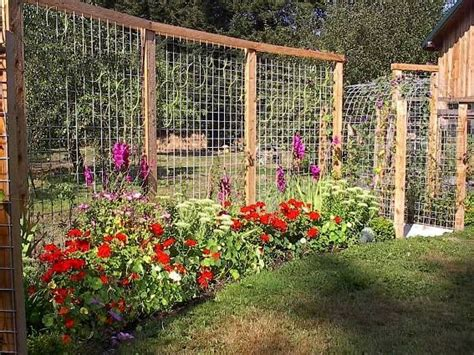 Ideas For Trellis In Garden 25 Best Ideas About Garden Fences On Pinterest Fence Garden Garden Fencing And Vegetable