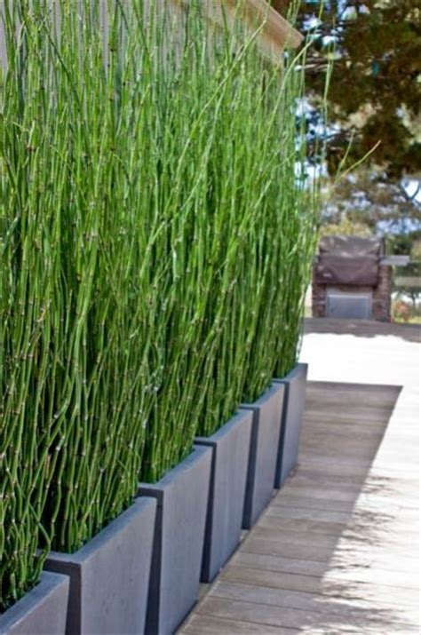 Bamboo Planter Ideas 25 best ideas about bamboo planter on bamboo