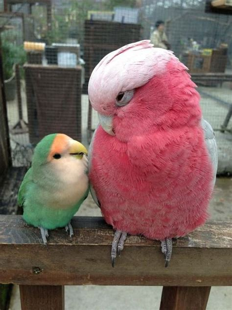 30 best images about lovebirds on pinterest bingo love