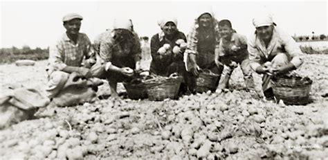 fucino on line chi siamo vendita patate fucino