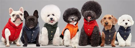 design dog jacket moncler dog jacket keeps your pooch toasty and trendy