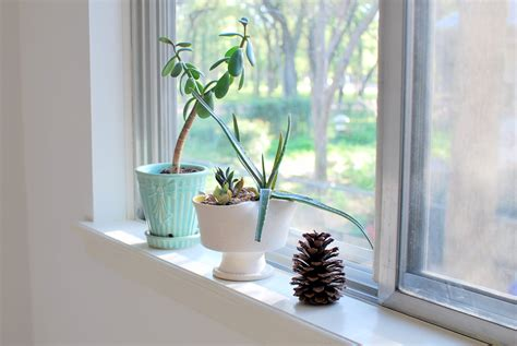 Window Sill Plants Decor How To Make Use Of Dead Space In Your Flat