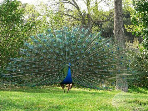 imagenes reales wikipedia animales mas raros del mundo animalesextintos11