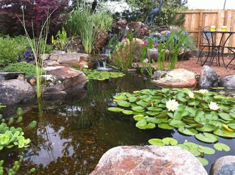 25 best ideas about coy pond on koi ponds