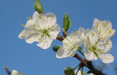 nomi di piante e fiori l app per riconoscere piante e fiori si chiama plantnet