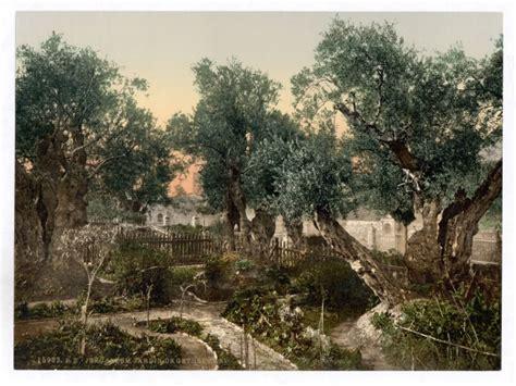 garden  gethsemane  stock photo public domain pictures