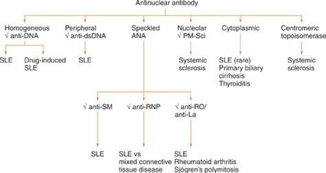 ana pattern lab test 루푸스 lupus 진단검사 중 anti ds dna double stranded antibody 검사