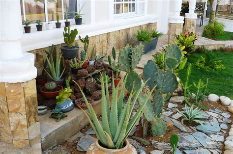 jardin xerofilo mi jardin xerofilo cactus y suculentas
