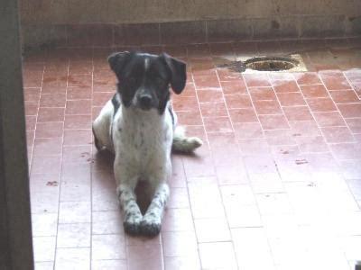 canile pavia adozioni adottati cani di pavia alcuni casi urgenti adozioni