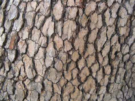 bark pattern drawing tree bark drawing pattern www imgkid com the image kid
