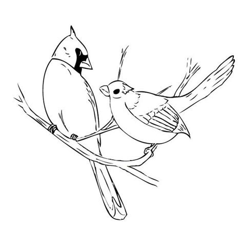 free coloring pages of flying cardinal