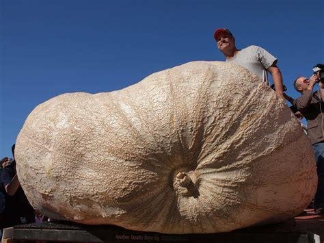 world s heaviest the heaviest pumpkin business insider