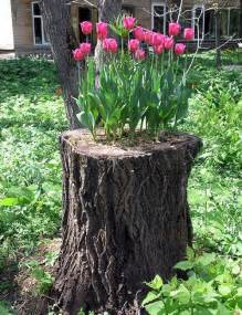 recycling tree stumps for yard decorations to remove tree