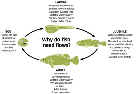 fish cycle diagram fish murray basin authority
