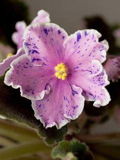 Und Stauden 3939 by 818 Besten Flowers 176 Bilder Auf Blumen