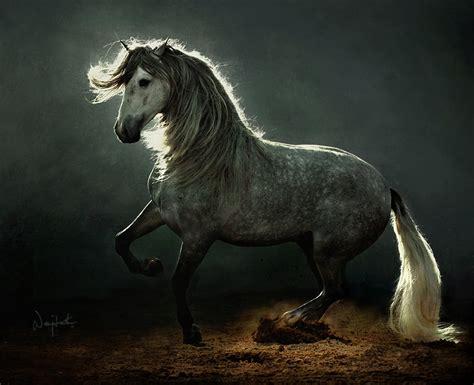 imagenes de unicornios salvajes hermosas imagenes de caballos salvajes im 225 genes taringa