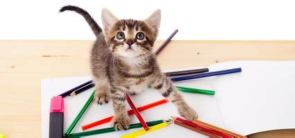 Cat Essay Writer by So You Want To Write About Cats Here S Some Advice Catster