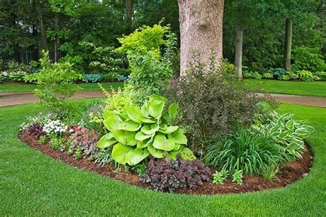 botanical trees tree types 1 landscaping pinterest landscaping ideas for under trees green thumb