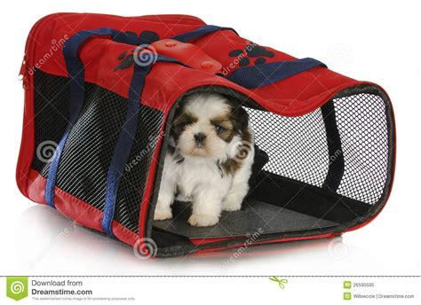 shih tzu carrier puppy carrier royalty free stock photo image 26595595