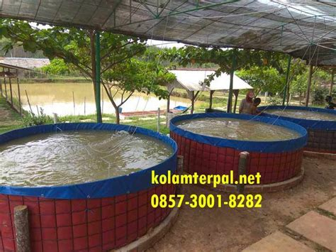 Jual Kolam Terpal Makassar kualitas ajib jual kolam terpal bulat siap pakai batam