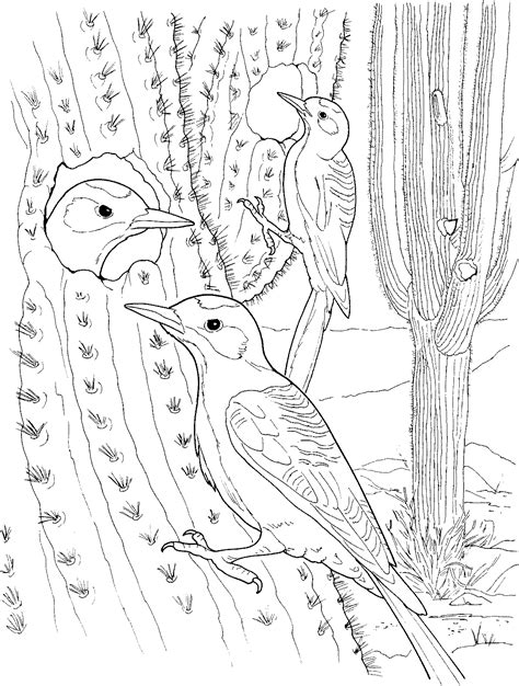Coloring Page Cactus by Free Printable Cactus Coloring Pages For