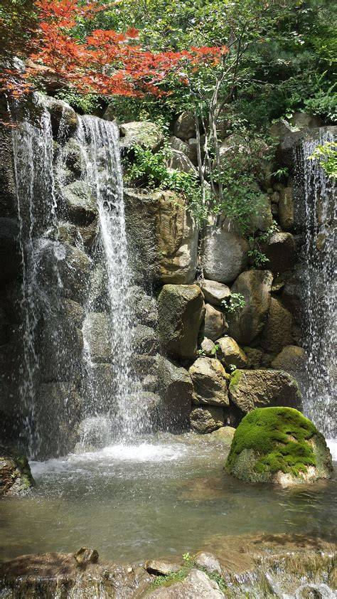 anderson japanese gardens wikipedia