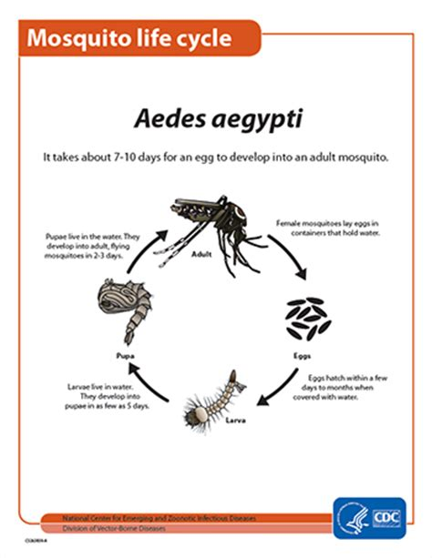 how to kill mosquitoes in home controlling mosquitoes at home zika virus cdc