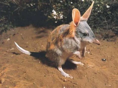 imagenes de animales extinguidos 15 animales extintos en los 250 ltimos 250 a 241 os marcianos