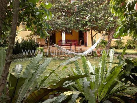 Mencari Bibit Kelapa Kopyor rumah dijual di cinere depok rp 2 800 000 000