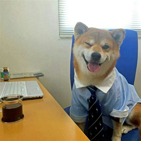 wink dogs   meme