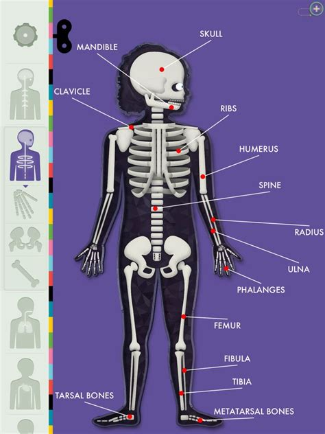 the human body the human body by tinybop a lively exploration applenappsapplenapps