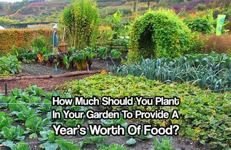 How Much Is The Botanical Garden How Much Should You Plant In Your Garden To Provide A Year S Worth Of Food Investor