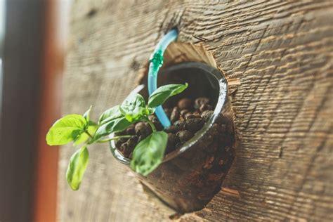 piante appartamento buio piante bagno buio bagno cieco i consigli per coniugare