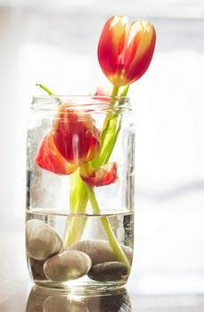 red  yellow tulips  clear glass jar  vase