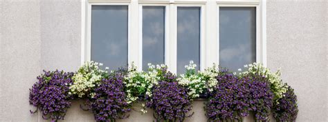 Flowers For Planter Boxes In Sun by Planning Window Boxes Garden Weasel