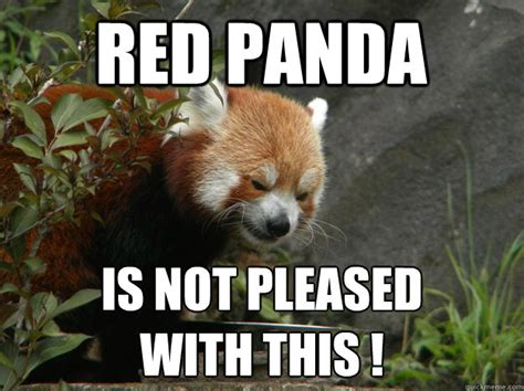 Red Panda Meme - angry red panda memes quickmeme