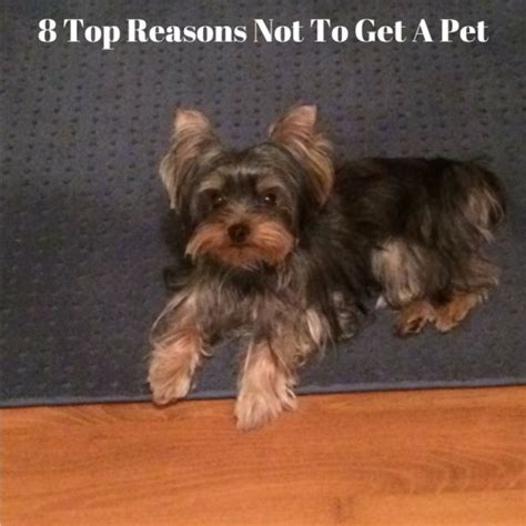 8 Reasons Not To Get A by 8 Top Reasons Not To Get A Pet Pethelpful
