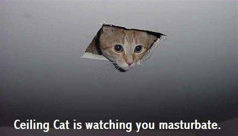 Inidia Cat 44 rofl cat 44 cats