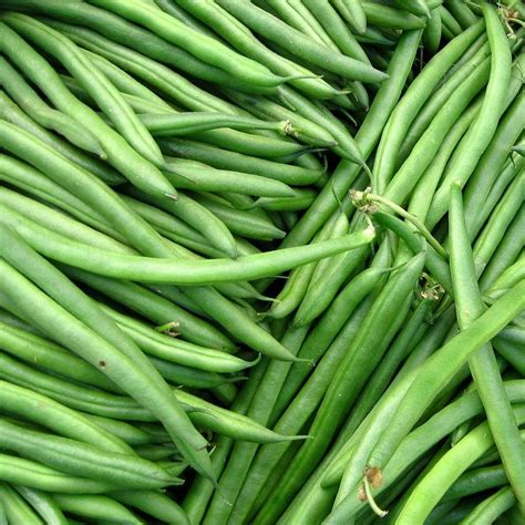 fresh green beans by penelope moore