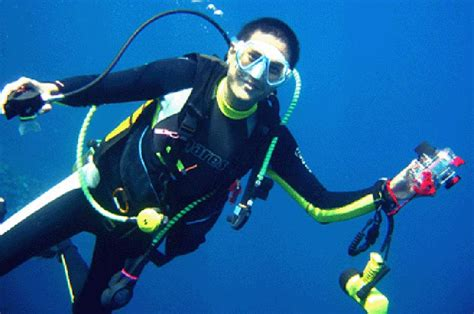 dive dove dived dived s definition what is