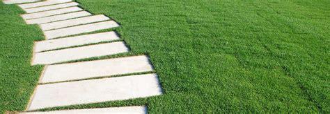 tappeti erbosi per giardino tappeti erbosi per un giardino perfetto green vision