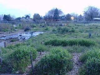 april 2011 broadway community garden sprouts community garden portland april