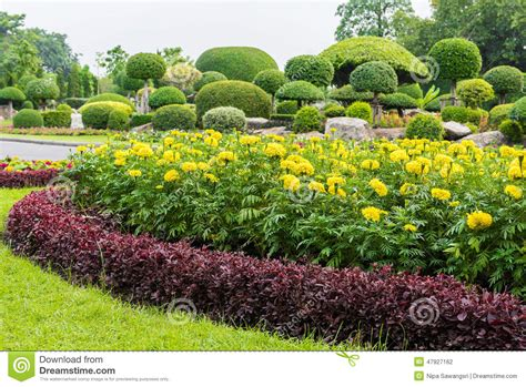 Marigold Flower Garden Marigold In The Garden Thailand Stock Photo Image 47927162