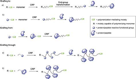 protein polymer protein polymer