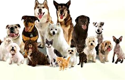 all about the dogs best all breeds in the world a to z with details