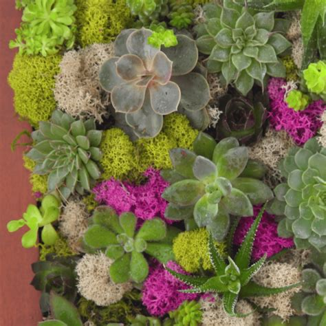 How To Make A Succulent Wall Garden In A Picture Frame How To Make A Succulent Wall Garden